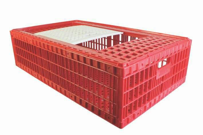 قفس مرغ زنده